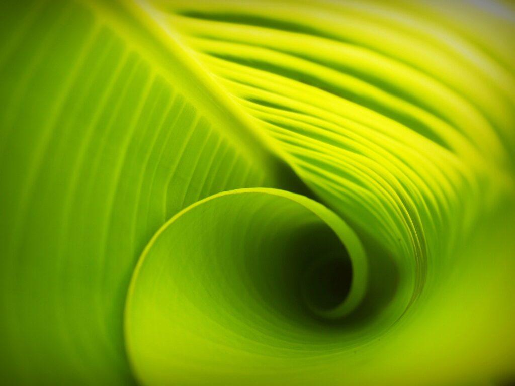 Cibler le «rythme» quotidien du magnésium peut optimiser le rendement des cultures