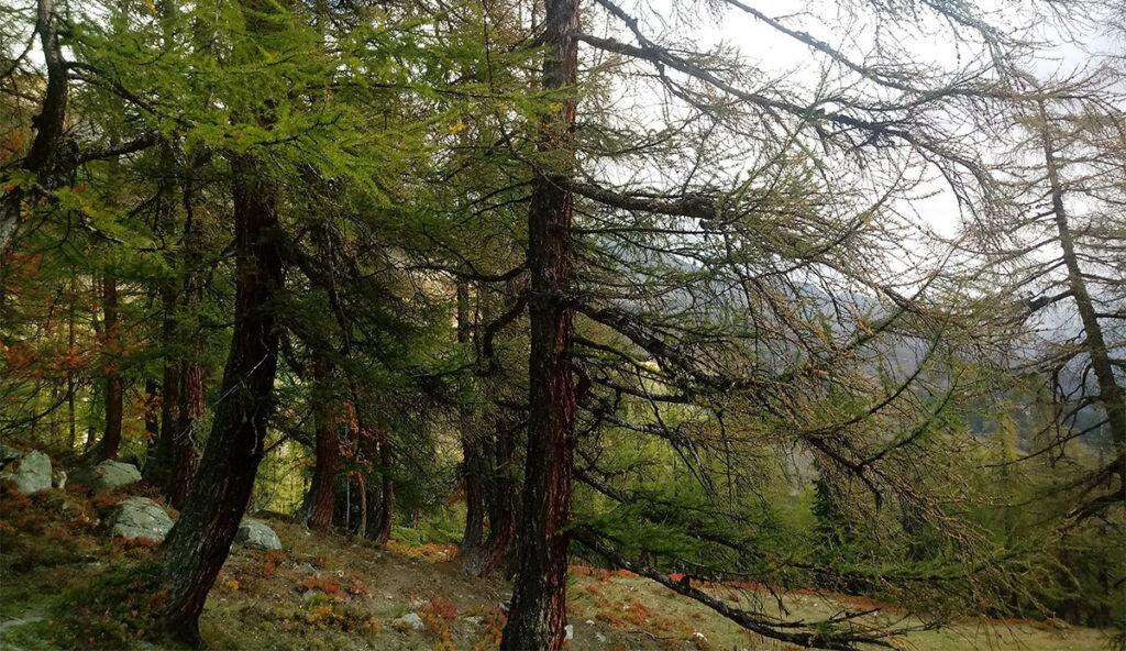 Comprendre pourquoi les arbres meurent peut être la clé du blocage du carbone