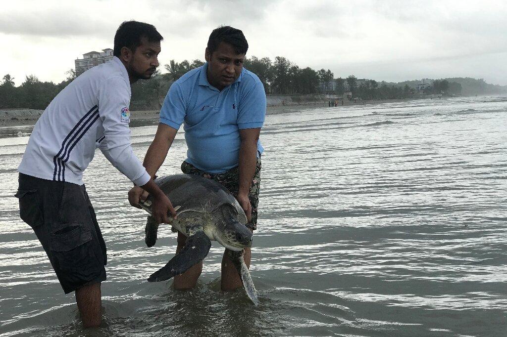 Course pour sauver des tortues enchevêtrées dans du plastique sur la plage du Bangladesh