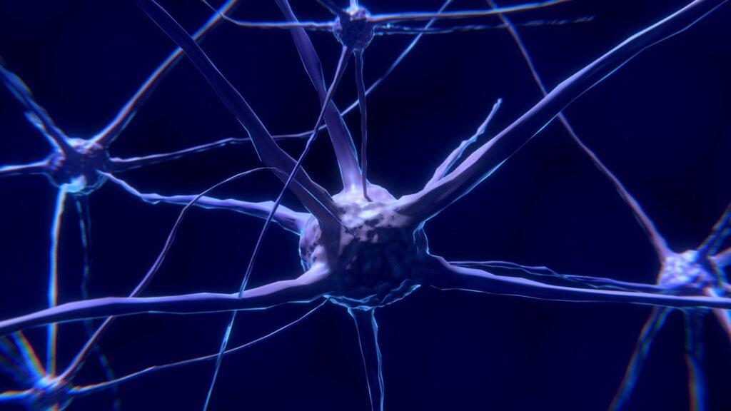 Découverte de protéines économisant les synapses, ouvrant des possibilités dans la maladie d'Alzheimer, la schizophrénie