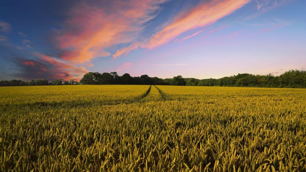 Des changements dans l'agriculture sont urgents pour sauver la biodiversité, selon des scientifiques