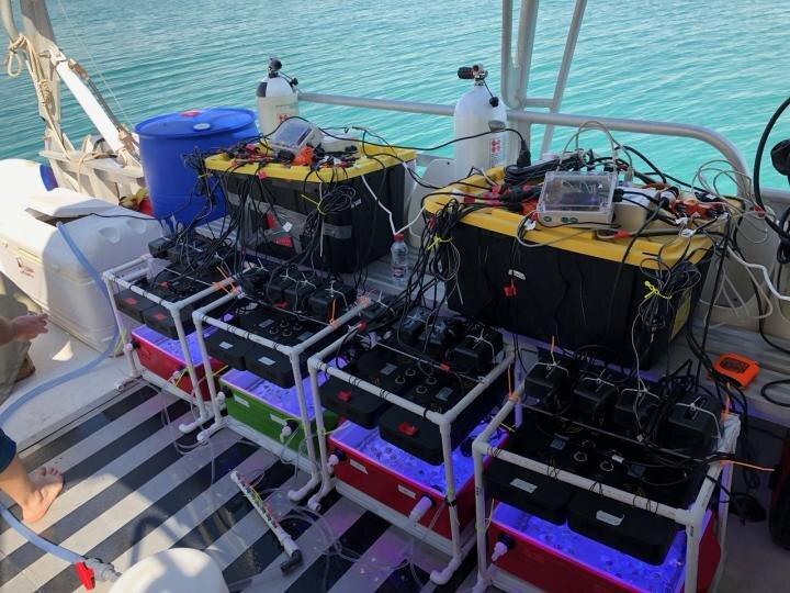 Des chercheurs développent un test rapide mobile pour évaluer la thermotolérance des coraux