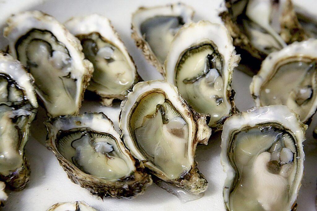 Des coquilles d'huîtres anciennes fournissent des informations historiques