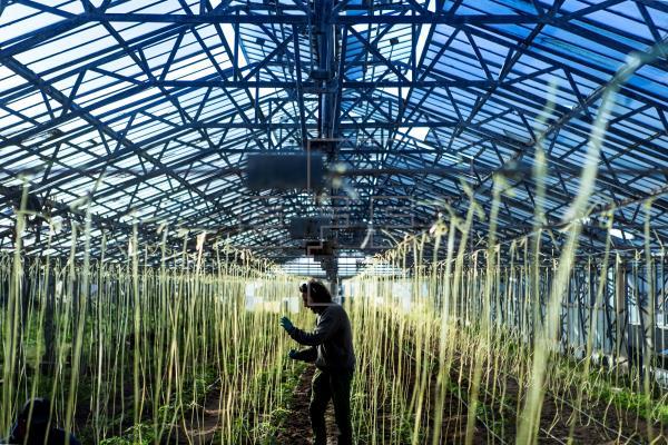 Solo habrá agricultura ecológica a entre 0,5 y 1,5 kilómetros del Mar Menor