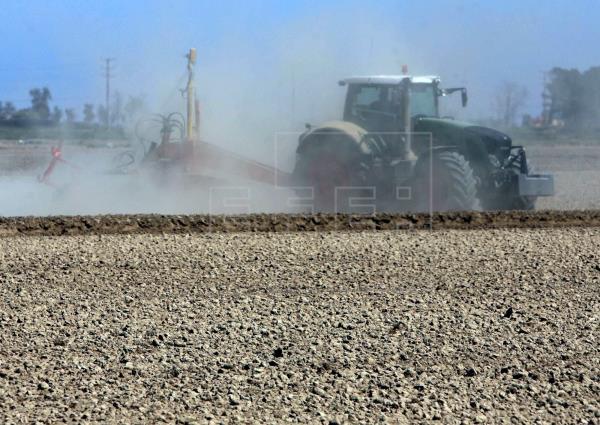 Alertan de que la salinización del suelo amenaza la agricultura de todo el planeta