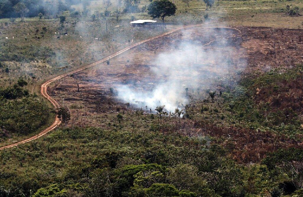 La Colombie a perdu une superficie forestière de la taille de Sao Paulo en 2019: rapport