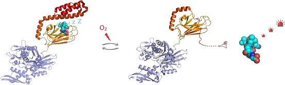 La S-glutathionylation de Hsp70 inductible par l'homme révèle un mécanisme de régulation impliquant un couvercle hélicoïdal C-terminal