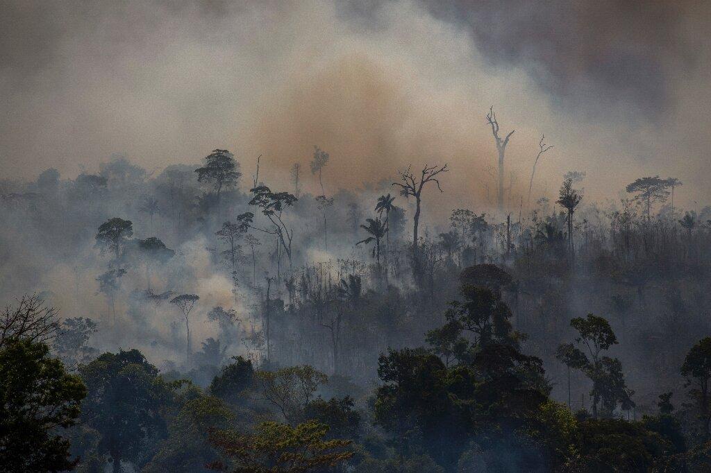 La déforestation amazonienne augmente de 25% au Brésil