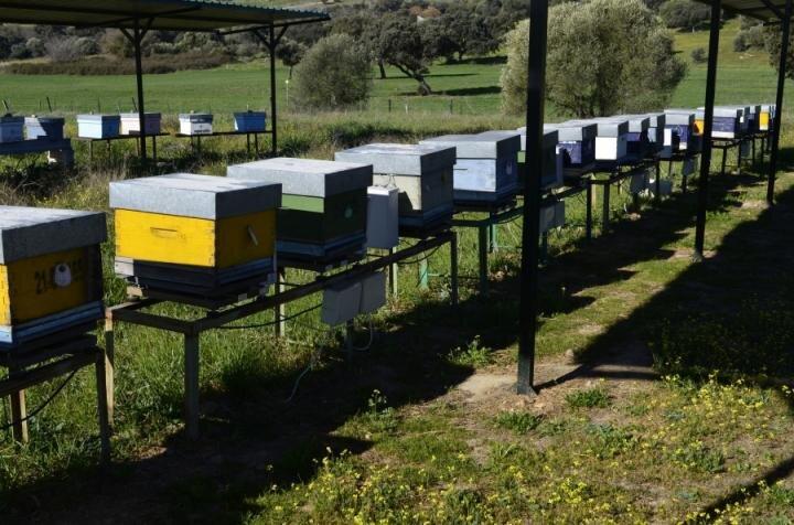 Les abeilles révèlent la pollution de l'environnement dans leur environnement