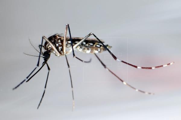 Aumentan a 21 los casos locales de dengue en los Cayos de Florida