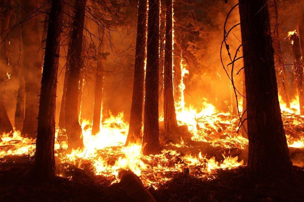 Les climatologues ignorent de plus en plus le rôle écologique des peuples autochtones