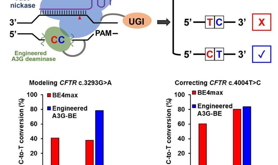 Les cytosines « spectateurs » rencontrent leur correspondance dans la technique d'édition de gènes