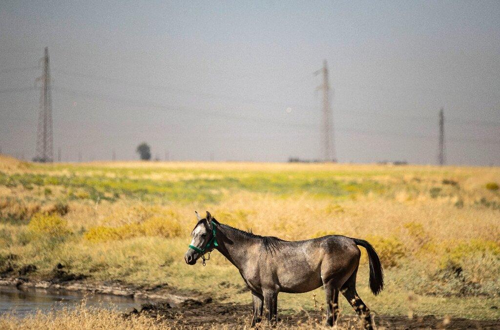 Les déversements d'hydrocarbures polluent les ruisseaux du nord-est de la Syrie