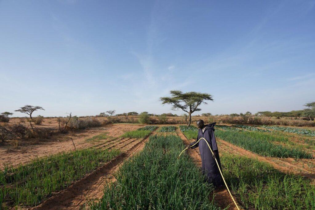 Les pesticides accélèrent la propagation d'agents pathogènes mortels d'origine hydrique
