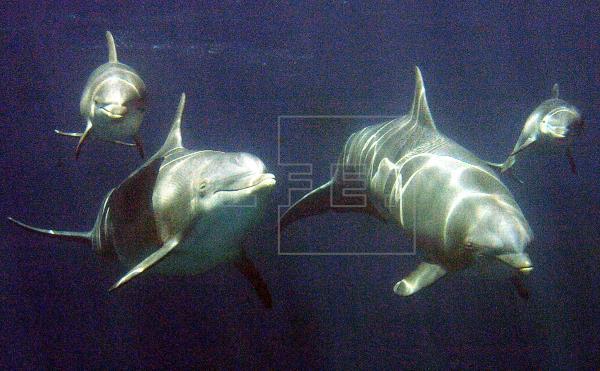 Trasladados a Atenas los tres delfines que vivían en el Zoo de Barcelona