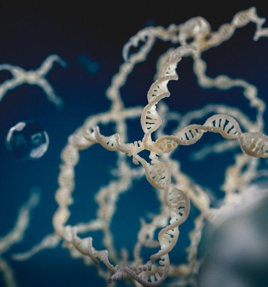 L'exposition aux enzymes provoque une réponse particulière dans les gouttelettes de liquide formées par l'ADN;  une nouvelle étude explique les mécanismes qui la sous-tendent