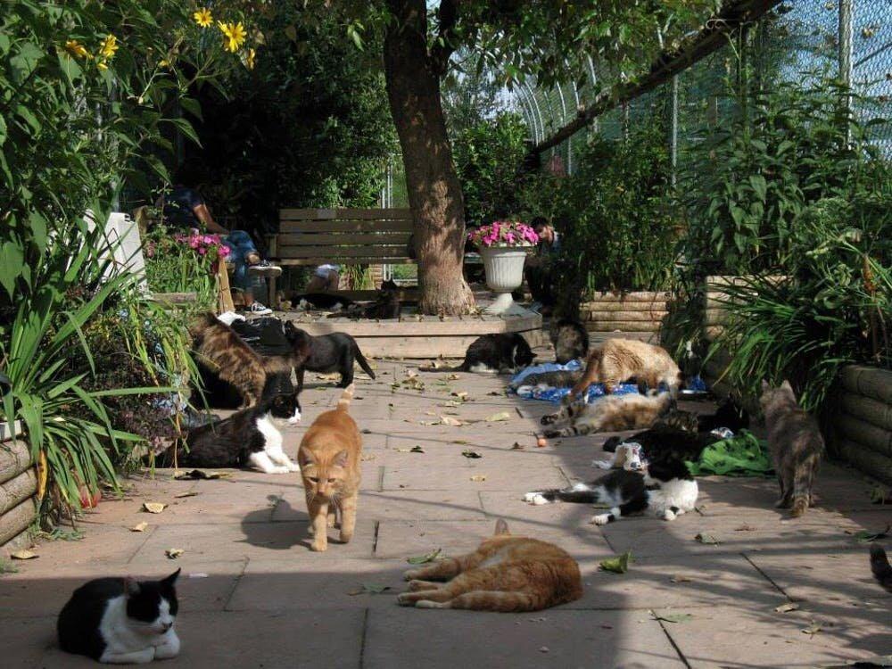 Ne blâmez pas les chats pour avoir détruit la faune - la logique fragile mène à la panique morale