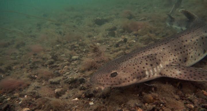 Plastiques trouvés dans les requins des fonds marins