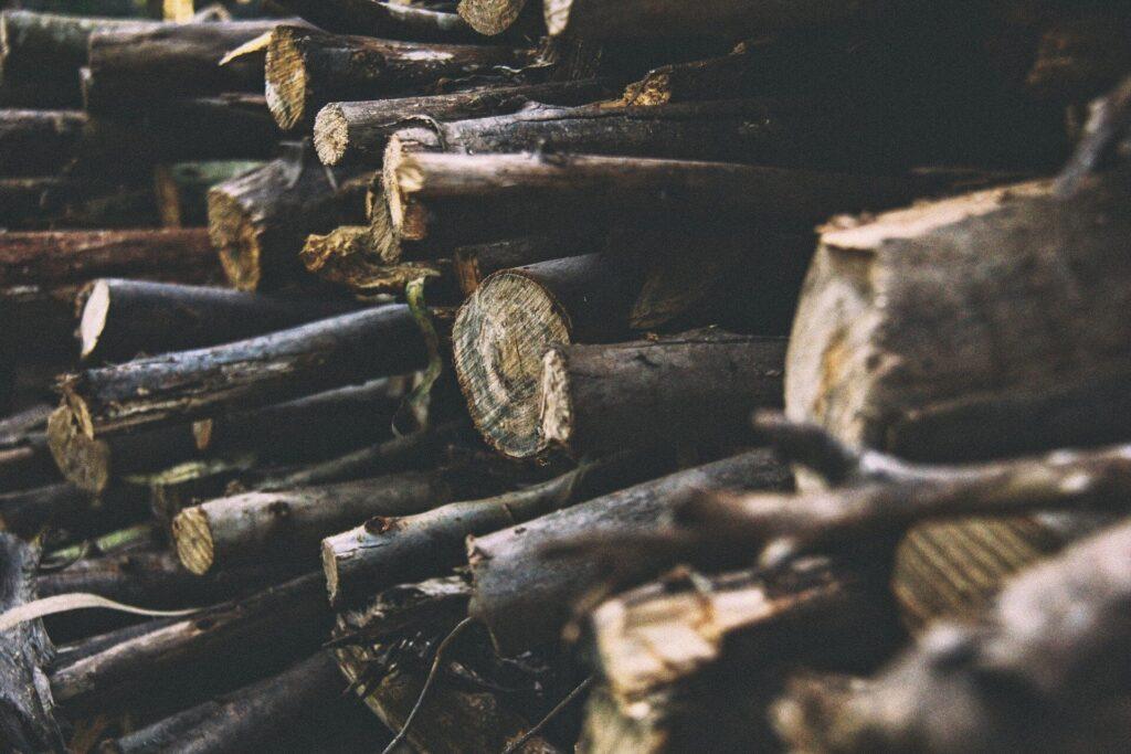 Ralentir la déforestation est la clé pour prévenir la prochaine pandémie - mais quel en est le coût?
