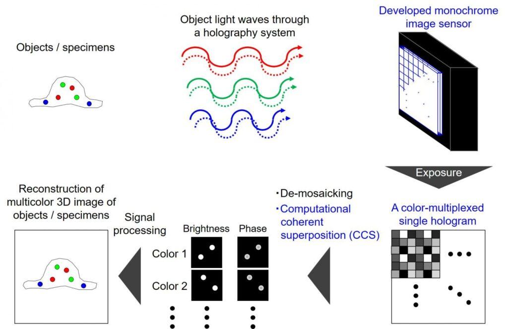 Système d'holographie couleur instantanée pour détecter la fluorescence et la lumière blanche obtenue