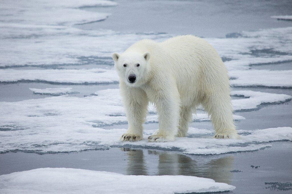 Température la plus élevée jamais enregistrée dans l'archipel arctique norvégien