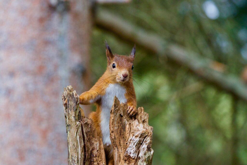 Un écureuil du Colorado testé positif à la peste bubonique, selon des responsables de la santé