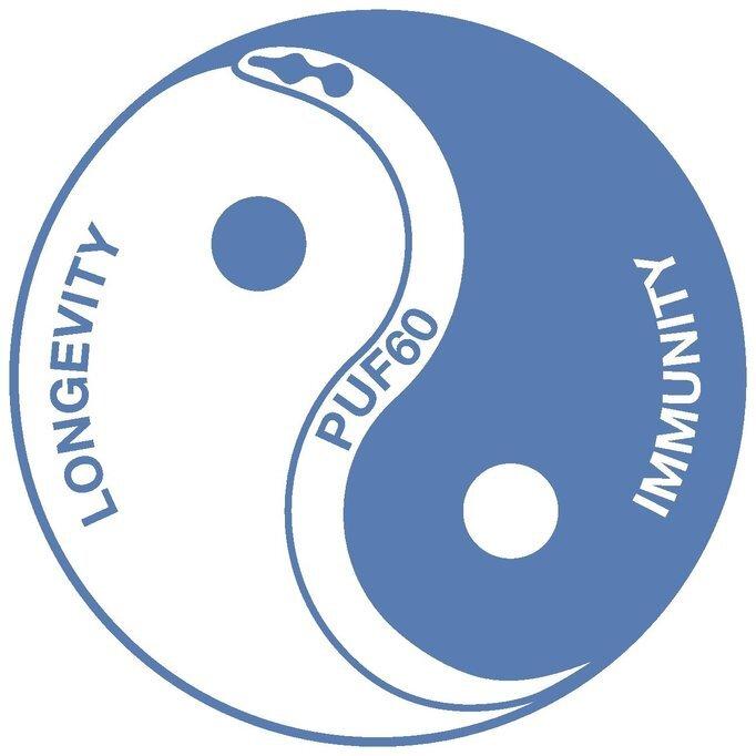 Un équilibre entre immunité et longévité