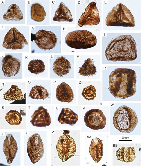 Une étude révèle des changements de paléovégétation et de paléoclimat à travers la transition Trias-Jurassique dans le sud de la Chine